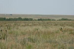 35_5 acres bennet 2