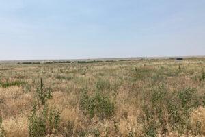 35_5 acres bennet 4