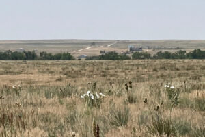 35_5 acres bennet 6